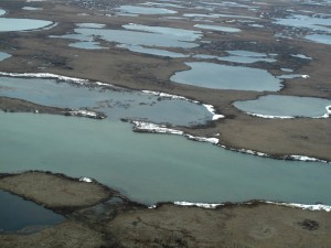 The tundra thaws