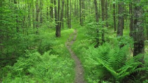 A walk down the North Country Trail